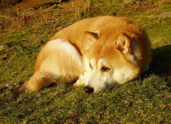 dog-1322710_960_720